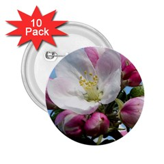 Apple Blossom  2.25  Button (10 pack)