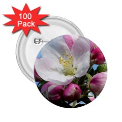 Apple Blossom  2.25  Button (100 pack)