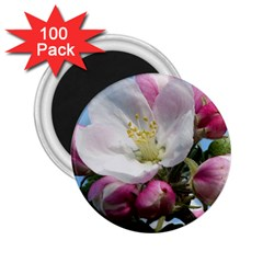 Apple Blossom  2 25  Button Magnet (100 Pack)