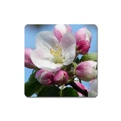 Apple Blossom  Magnet (square)