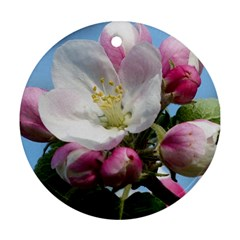 Apple Blossom  Round Ornament (two Sides)
