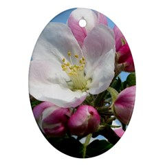 Apple Blossom  Oval Ornament (Two Sides)