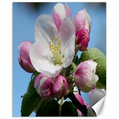 Apple Blossom  Canvas 16  X 20  (unframed)