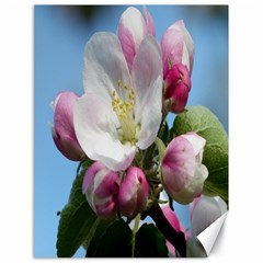 Apple Blossom  Canvas 18  x 24  (Unframed)