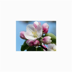 Apple Blossom  Canvas 36  X 48  (unframed)