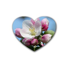 Apple Blossom  Drink Coasters 4 Pack (Heart)