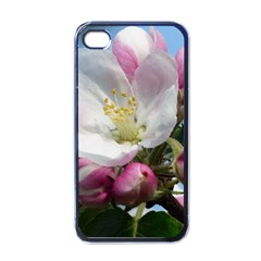 Apple Blossom  Apple iPhone 4 Case (Black)