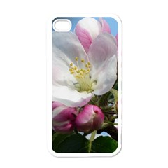 Apple Blossom  Apple Iphone 4 Case (white)