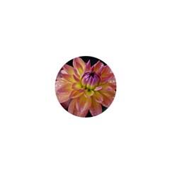 Dahlia Garden  1  Mini Button Magnet