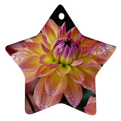 Dahlia Garden  Star Ornament