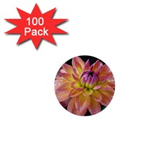 Dahlia Garden  1  Mini Button (100 Pack)