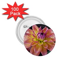 Dahlia Garden  1 75  Button (100 Pack)