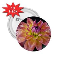 Dahlia Garden  2.25  Button (10 pack)