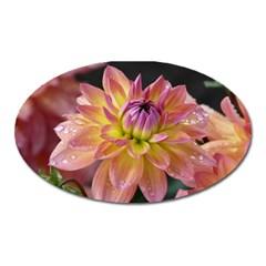Dahlia Garden  Magnet (Oval)