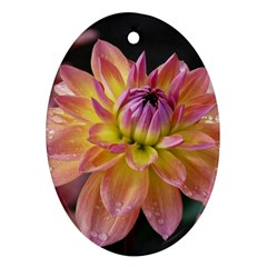 Dahlia Garden  Oval Ornament (Two Sides)