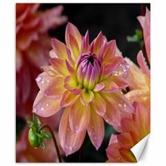 Dahlia Garden  Canvas 8  x 10  (Unframed)