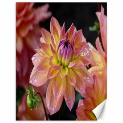 Dahlia Garden  Canvas 12  x 16  (Unframed)