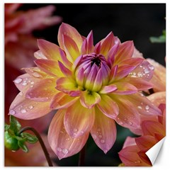 Dahlia Garden  Canvas 16  x 16  (Unframed)