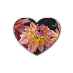 Dahlia Garden  Drink Coasters 4 Pack (heart)