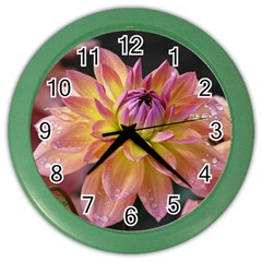 Dahlia Garden  Wall Clock (color)