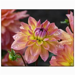 Dahlia Garden  Canvas 11  X 14  (unframed)