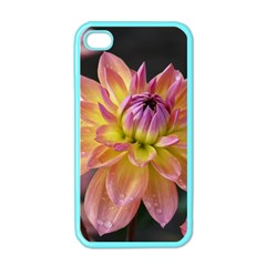 Dahlia Garden  Apple Iphone 4 Case (color)
