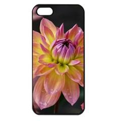 Dahlia Garden  Apple iPhone 5 Seamless Case (Black)