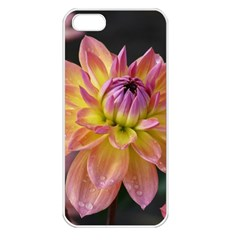 Dahlia Garden  Apple iPhone 5 Seamless Case (White)
