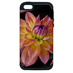 Dahlia Garden  Apple Iphone 5 Hardshell Case (pc+silicone)