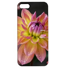 Dahlia Garden  Apple iPhone 5 Hardshell Case with Stand