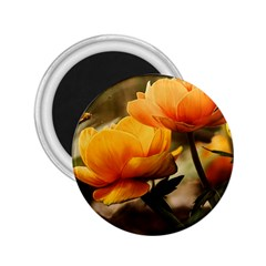 Flowers Butterfly 2.25  Button Magnet