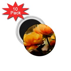 Flowers Butterfly 1 75  Button Magnet (10 Pack)