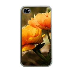 Flowers Butterfly Apple Iphone 4 Case (clear)