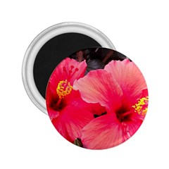 Red Hibiscus 2.25  Button Magnet