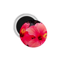 Red Hibiscus 1.75  Button Magnet