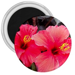 Red Hibiscus 3  Button Magnet
