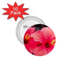 Red Hibiscus 1.75  Button (10 pack)
