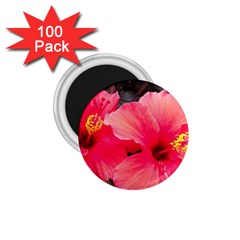 Red Hibiscus 1 75  Button Magnet (100 Pack)