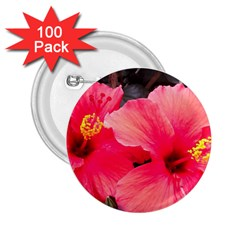 Red Hibiscus 2 25  Button (100 Pack)
