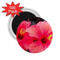 Red Hibiscus 2.25  Button Magnet (100 pack)