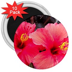 Red Hibiscus 3  Button Magnet (10 pack)