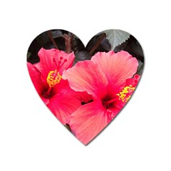 Red Hibiscus Magnet (Heart)