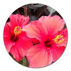 Red Hibiscus Magnet 5  (Round)