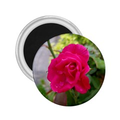 Pink Flower 2 25  Button Magnet