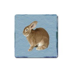 Cute Bunny Magnet (Square)