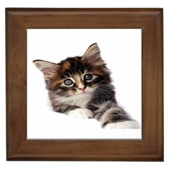 Curious Kitty Framed Ceramic Tile