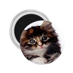 Curious Kitty 2.25  Button Magnet