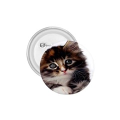 Curious Kitty 1.75  Button
