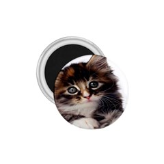 Curious Kitty 1.75  Button Magnet
