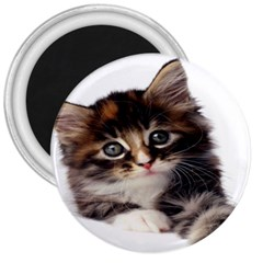 Curious Kitty 3  Button Magnet
